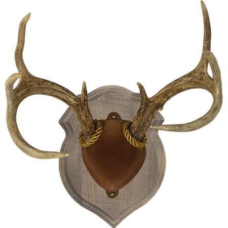 Walnut Hollow Country Deluxe Antler Display Kit Rustic ...