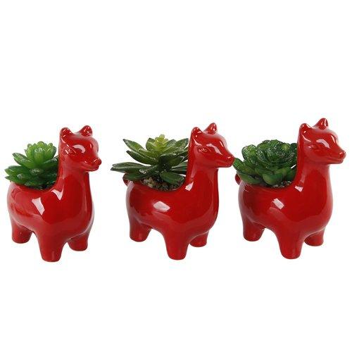 Wrought Studio 3 Piece Llama Gift Succulent Plant Set