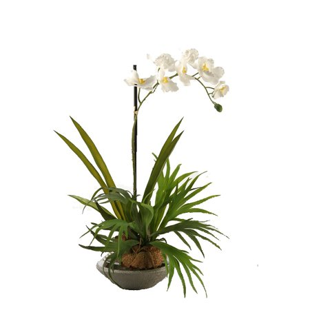 D Silks Mini Staghorn Fern With Cream Vanda Orchid In Silver And Gun Metal Ceramic Planter