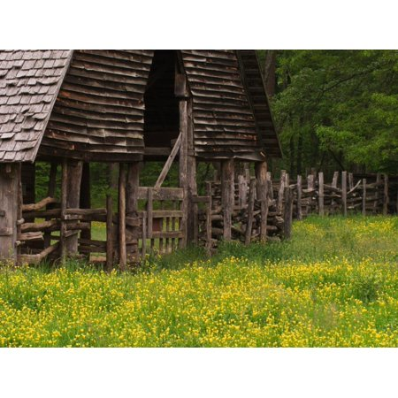 Buttercups and Cantilever Barn, Pioneer Homestead, Great Smoky Mountains National Park, N. Carolina Print Wall Art By Adam Jones ()