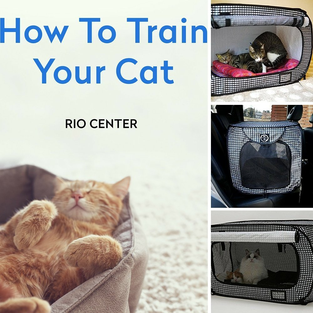 Cat Portable Travel Crate ; EBOOK HOW TO TRAIN YOUR CAT B...