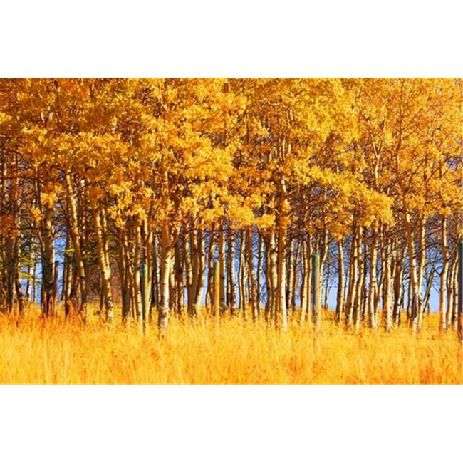 Posterazzi DPI1764054LARGE Trees in Autumn Poster Print by Don Hammond, 34 x 22 - Large - image 1 de 1