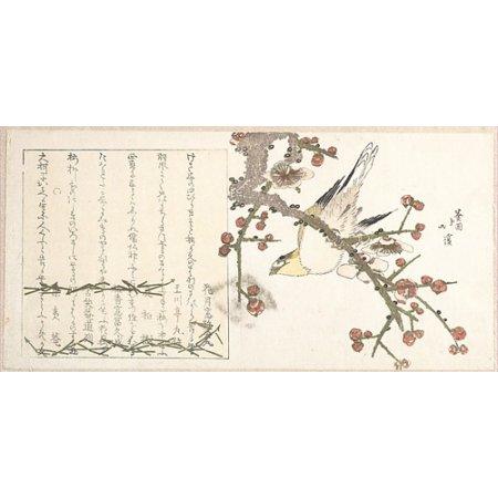 "Bush Warbler on a Plum Branch (Ume ni uguisu) Poster Print by Totoya Hokkei (Japanese 1780  ""1850) (18 x 24)"