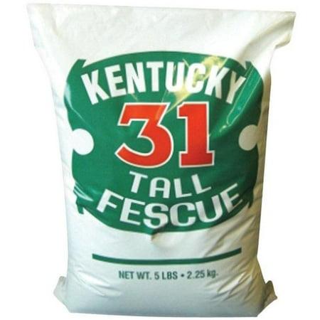 Dwarf Fescue Seed (Barenbrug Kentucky 31 Tall Fescue Grass Seed, 5 lbs)