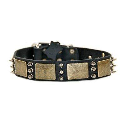 dean and tyler beauty and the bold, dog collar with brass plate and nickel  spike - black - size 20-inch by 1-1/2-inch - fits neck 18-inch to 22-inch
