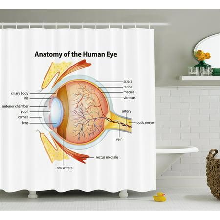 Educational Shower Curtain Human Eye Anatomy Cornea Iris Pupils Optic Nerves Graphic Print Fabric Bathroom Set With Hooks 69W X 75L Inches Long