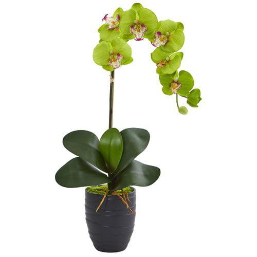 Bloomsbury Market Phalaenopsis Orchid Floral Arrangement in Decorative Vase