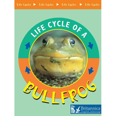 Bullfrog - eBook Insect Life Cycles