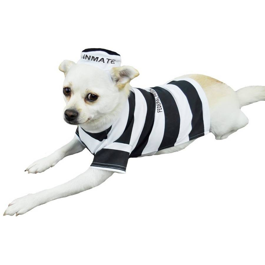 Otis and Claude Fetching Fashion Prison Pooch Costume, M