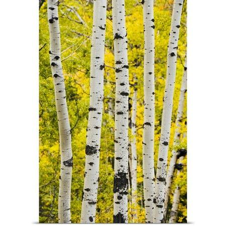 Great Big Canvas Yves Marcoux Poster Print Entitled Aspen In Autumn  Jasper National Park  Alberta  Canada