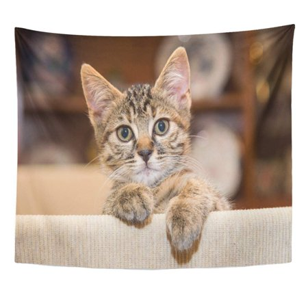 UFAEZU Cute White Cut Baby Tabby Kitten Playing Cat Wall Art Hanging Tapestry Home Decor for Living Room Bedroom Dorm 51x60 inch