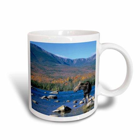 3dRose Cow moose wildlife, Mt. Katahdin, Baxter SP, Maine - US20 HGA0006 - Howie Garber, Ceramic Mug, 15-ounce