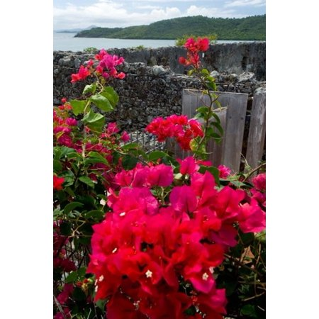 Flowering Bougainvillea   Ruins Chateau Dubuc Martinique French Antilles West Indies Canvas Art   Scott T Smith  Danitadelimont  24 X 36