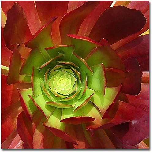 "Trademark Fine Art ""Succulent Square I"" Canvas Wall Art by Amy Vangsgard"