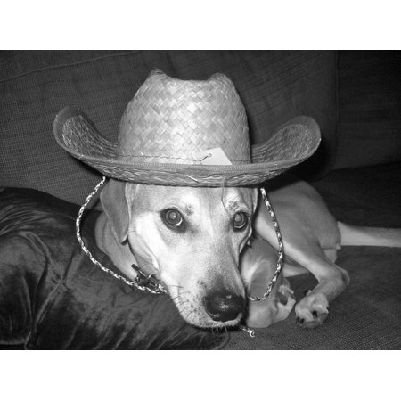LAMINATED POSTER Sombrero Black And White Dog Funny Pet Poster Print 11 x 17](Dog Sombrero)