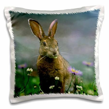 3dRose Snowshoe Hare, Lepus americanus, Ontario, Canada - Pillow Case, 16 by - Ontario Canada Pc