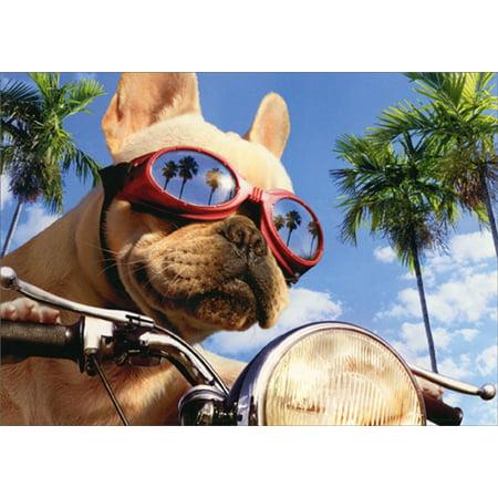 Avanti Press Motorcycle Chopper Dog Humorous / Funny Birthday