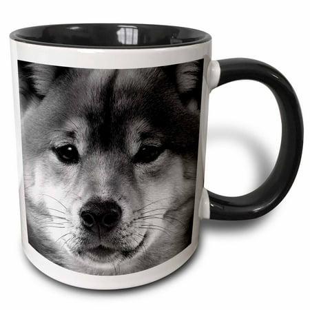 3dRose Shiba Inu - Two Tone Black Mug, 11-ounce