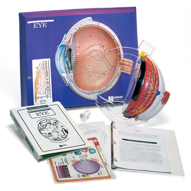 Hubbard Scientific 2640 Eye Model Activity Set