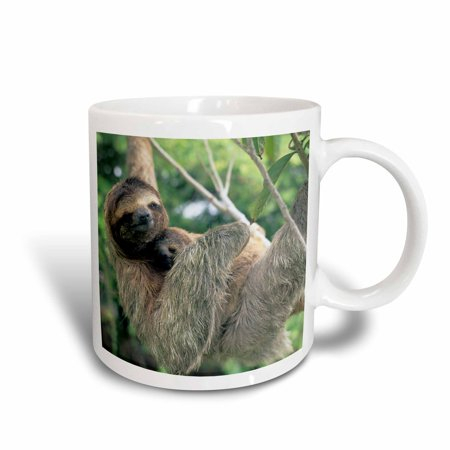 3dRose Three-toed sloth wildlife, Corcovado NP, Costa Rica - SA22 KSC0137 - Kevin Schafer, Ceramic Mug, 11-ounce