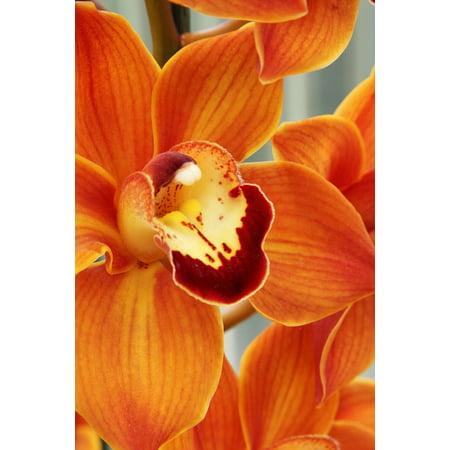 Delicate Blooms - LAMINATED POSTER Bloom Delicate Close-up Blossom Exotic Beautiful Poster Print 24 x 36