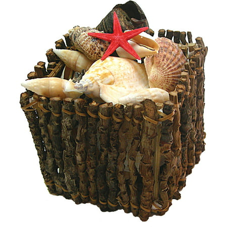 Assorted Shell Crate 15 Shells Halloween Decoration