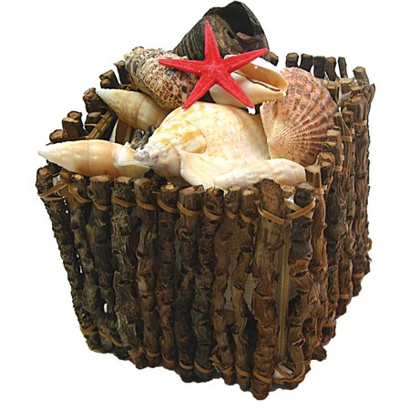 Assorted Shell Crate 15 Shells Halloween Decoration](Halloween 1 5)