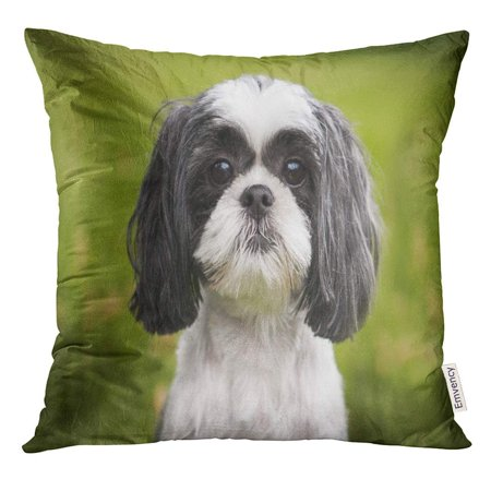 CMFUN Green Dog Shih Tzu Canine Close Grass Grey Pillow Case 18x18 Inches Pillowcase - Gray Shih Tzu
