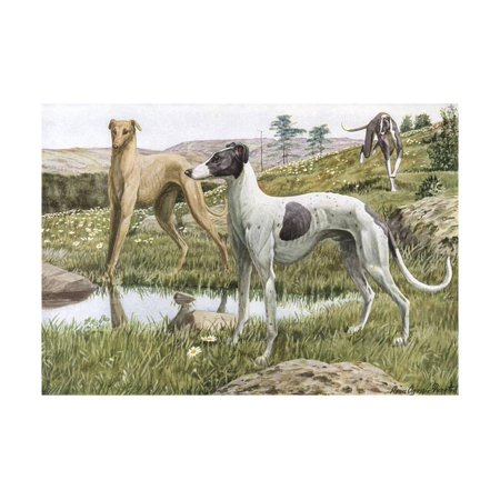 Fuertes Color - Greyhounds in Country Print Wall Art By Louis Agassiz Fuertes