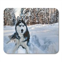 KDAGR Husky Dog Lying in The Snow Black and White Siberian Blue Eyes on Walk Winter Mousepad Mouse Pad Mouse Mat 9x10 inch