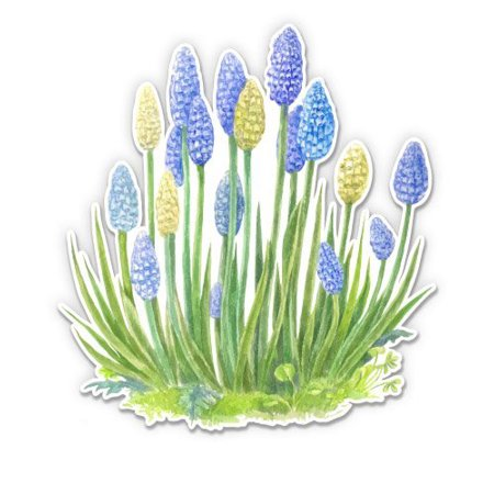 Watercolor Pretty Blue Flowers Muscari - Vinyl Sticker Waterproof Decal Sticker 5""
