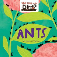 What Lives in the Dirt?: Ants (Hardcover)