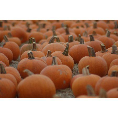 - Canvas Print Field Pumpkin October Halloween Stretched Canvas 10 x 14