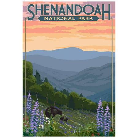 Shenandoah National Park, Virginia - Black Bear and Cubs Spring