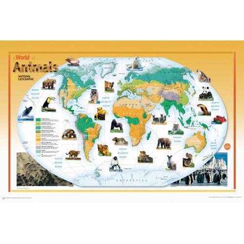 Brewster WPK1059 World Of Animals Nat Geo Poster