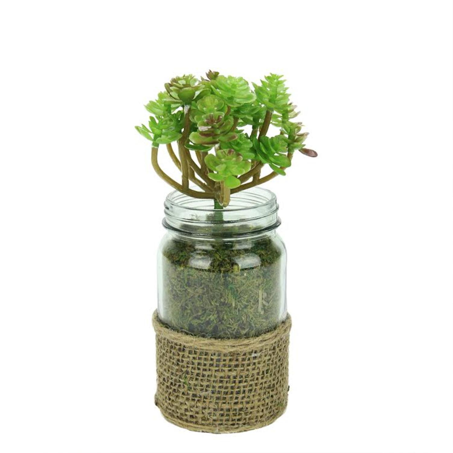 "7.25"" Green and Brown Potted Artificial Succulent Plant in Glass Jar with Burlap Grip"