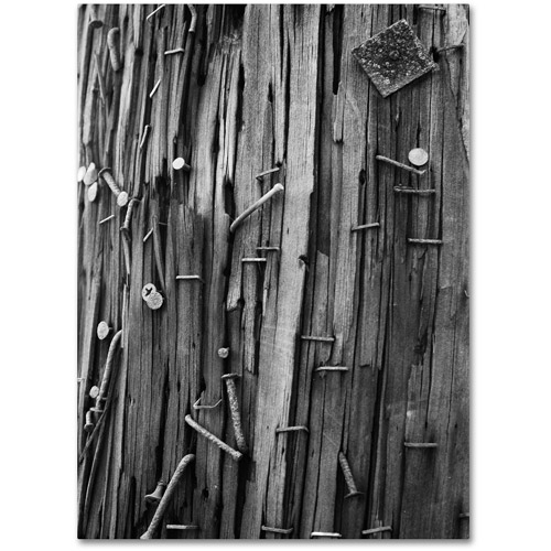 "Trademark Fine Art ""Nails & Staples"" Canvas Wall Art by Patty Tuggle"