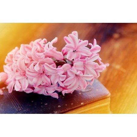 Framed Art for Your Wall Flower Flowers Fragrant Hyacinth Pink 10x13 Frame