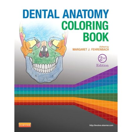 Dental Anatomy Coloring Book (Paperback) - Walmart.com