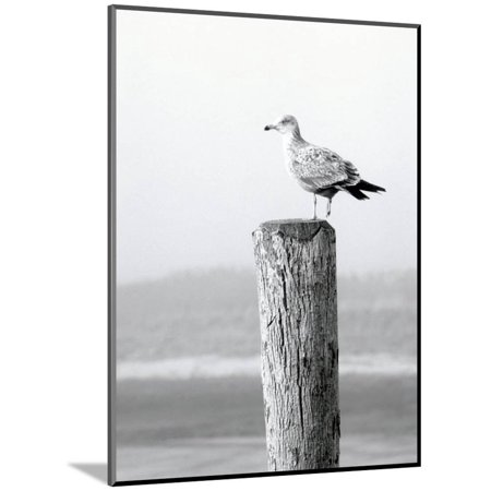 Cape Cod Wall Mount - White Seagull on Post, Cape Cod Wood Mounted Print Wall Art By Steven Emery