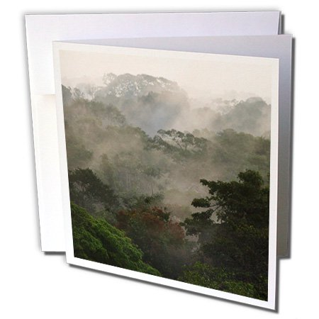 3dRose Canopy Scenic, Yasuni National Park, Amazon Rainforest, Ecuador. - Greeting Cards, 6 by 6-inches, set of 6 Canopy Scenic, Yasuni National Park, Amazon Rainforest, Ecuador. Greeting Card is a great way to say  thank you  or to acknowledge any occasion. These blank cards are made of heavy-duty card stock that allows for smudge free writing. Cards are creased for easy folding and come with white envelopes. Available individually or in sets of 6 and 12.