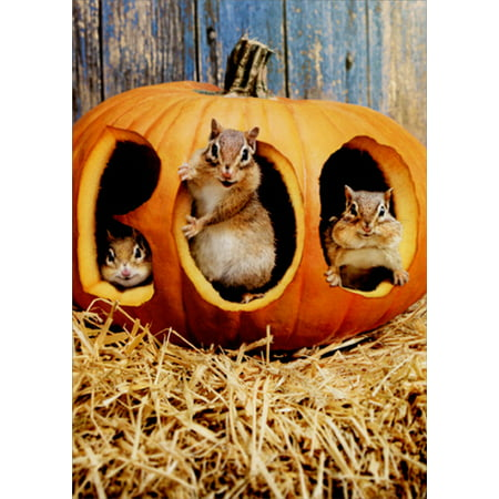 Avanti Press Chipmunk Pumpkin Boo Funny Halloween Card - Funny Photo Maker Halloween
