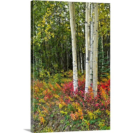 Great Big Canvas Premium Thick Wrap Canvas Entitled Colorful View Of Aspen Tree Trunks And Fall Foliage  Kenai Peninsula In Southcentral