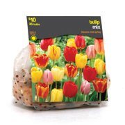 Tulip Mixed