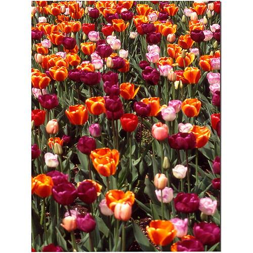 "Trademark Art ""Multi-Colored Tulips"" Canvas Art by Kurt Shaffer"