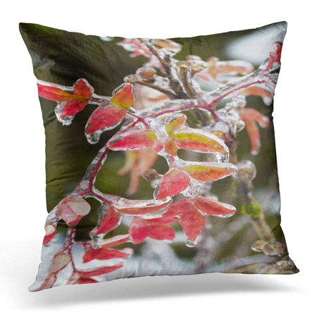 CMFUN Frozen Plants Covered in Thick Layer of Ice After Rare and Dangerous Winter Storm with Freezing Rain Pillow Case Pillow Cover 18x18