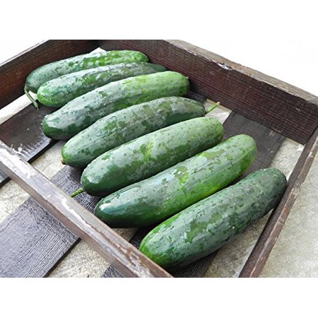 Cucumber Turbo Great Hybrid Treated Garden Vegetable By Seed Kingdom 15 Seeds (Cucumber Ideas)