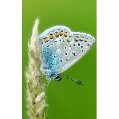 Moth Caterpillar - Notebook: Common blue butterfly butterflies insect wing caterpillar moth larva pupa egg order Paperback