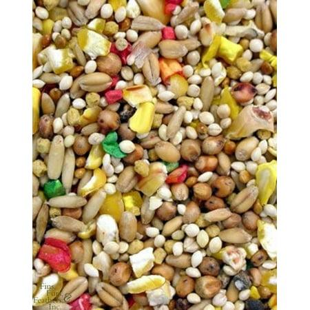 Higgins Vita Seed Dove Bird Food, 25 Lb