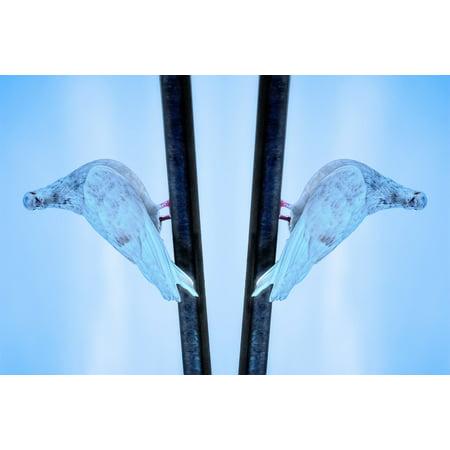 Canvas Print Background Reflection Mirror Optical Illusion Bird Stretched Canvas 10 x 14](Halloween Mirror Illusion)
